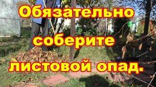Соберите листья осенью,весной будет удобрение!