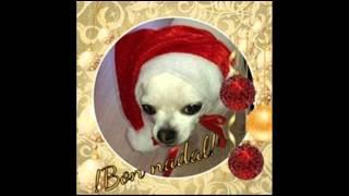 Animals Sense Sostre Feliz Navidad Merry Xtmas 2014