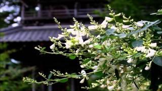 「麗人草の歌」カラオケ・オリジナル歌手・林伊佐緒