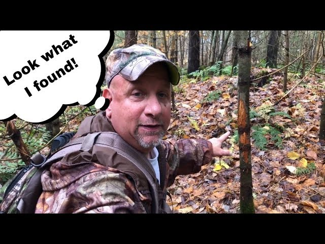 Best Way To Scout Public Land For Hunting