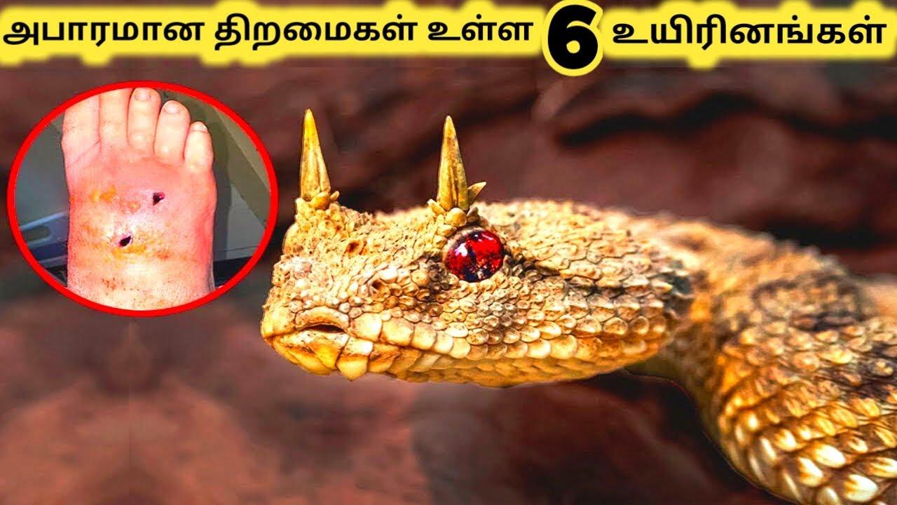 சுவாரசியமான விஷயங்கள் || Six Amazing Animals Part 4 || Tamil Galatta News