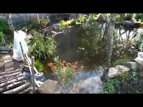 Bassin de jardin naturel youtube - Petit bassin de jardin ...