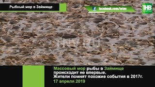 В Займище в Татарстані стався мор риби | ТНВ