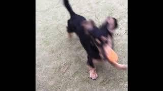ペットランドミクニ でボール遊びが止まらない thumbnail