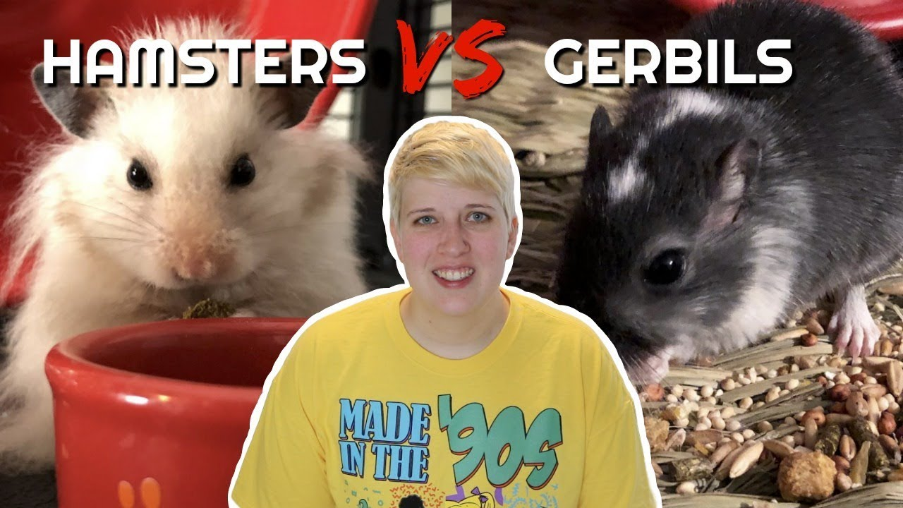 HAMSTERS vs GERBILS | Which is the better pet for you?