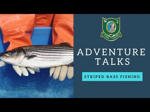 NH Fish And Game Adventure Talks - Striped Bass Fishing