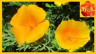 Яркие краски лета Цветочный релакс
