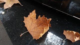 Осень.  Подарки от зрителей моего видео канала!