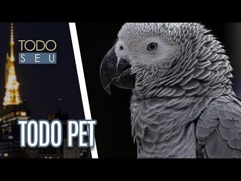 Cuidados Com As Aves | Todo Pet - Todo Seu (20/04/18)