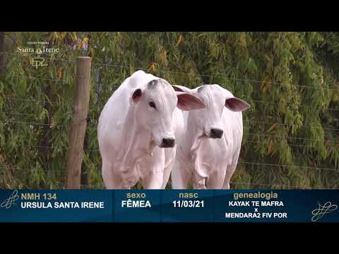 LOTE 21   NMH 134 e NMH 135