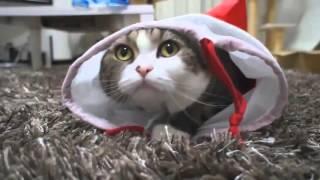 Милые мягкие пушистые смешные кошки