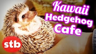 Hedgehog Cafe in Tokyo, Japan // Pet Cafe with SoloTravelBlog