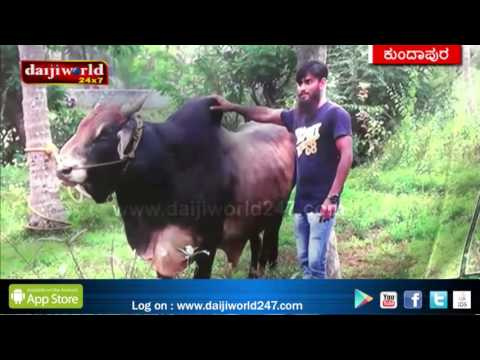 Kundapur: Inspirational Muslim Family - by supporting dairy farming│Daijiworld Television