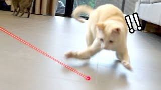 cats-vs-laser-first-time-reaction