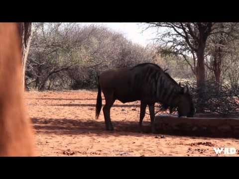 NonStop Hunting - Bowhunting Africa Part 2
