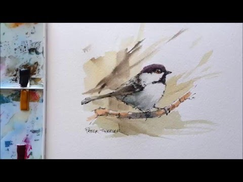 Line and Wash Black Capped Chickadee. Great for begginers in Wildlife painting