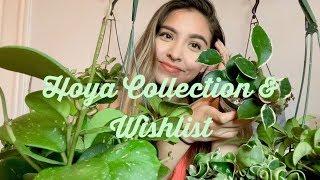 Hoya Collection & Wishlist