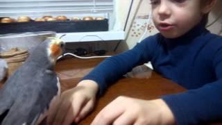 Говорящий попугай Кеша корела прикол и ребенок