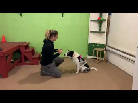 Video 2 application CTDI to Do More With Your Dog from Rachelle Turgeon