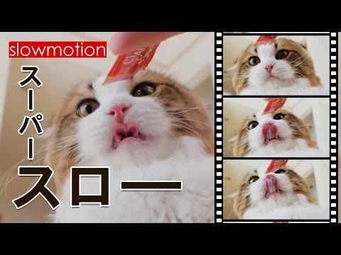 【スローモーション】舌ペロ!ちゅ~るを舐める猫をハイスピード撮影してみた
