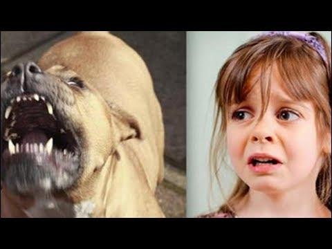 Bu Köpek Her Gün Kızı Bekledi, 5 Yaşına Geldiğinde Ise Her şey Değişti