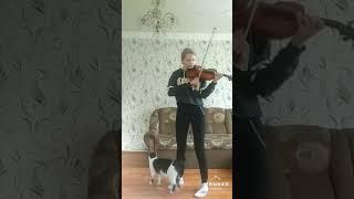 Как музыка скрипки воздействует на кота