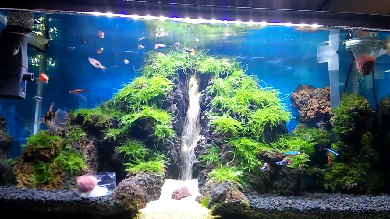 Aquarium Cantik