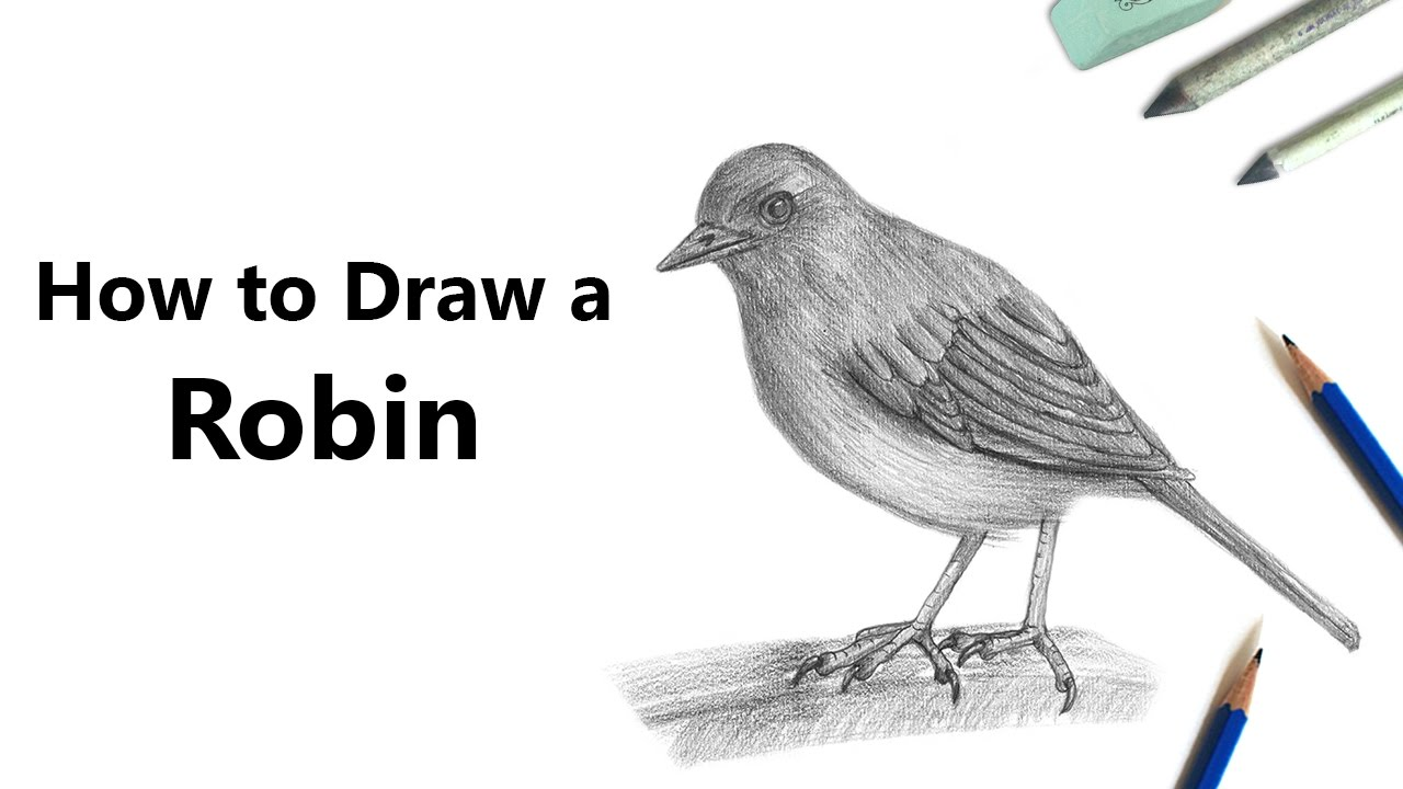 Uncategorized Robin Drawing how to draw a robin with pencils time lapse youtube lapse