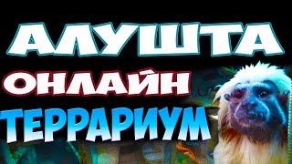 Алушта Аквариум 2020 Террариум онлайн экскурсия выставка экзотических животных. Крым отдых в Алуште