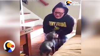 New Puppy Surprise: Girl LOSES IT After Meeting New Puppy | The Dodo