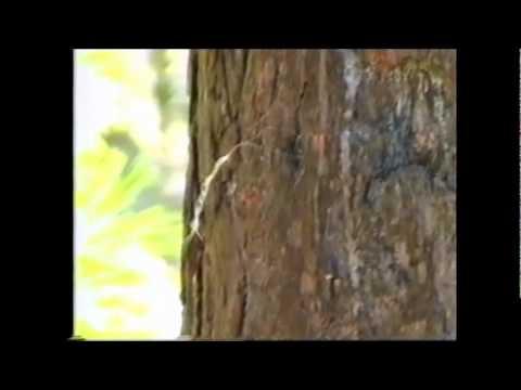 Животные лесной зоны.wmv
