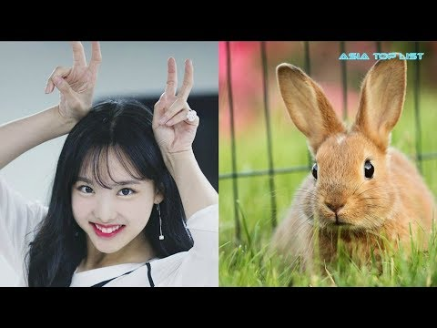 17 Idols Who Look Exactly Like Their Spirit Animals, According To Fans