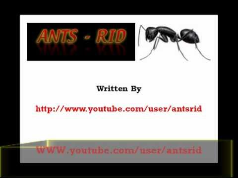 How To Get Rid Of Black Ants In The House Kitchen And Garden Youtube