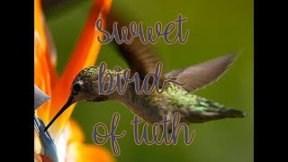 """The The """" Sweet Bird Of Truth"""""""