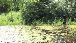 Ashdale Dog Training : Muck Black Labrador Dog Age 6 Months - Water Retrieve
