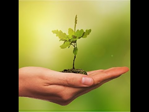 """Plant & Grow"" 06132021"