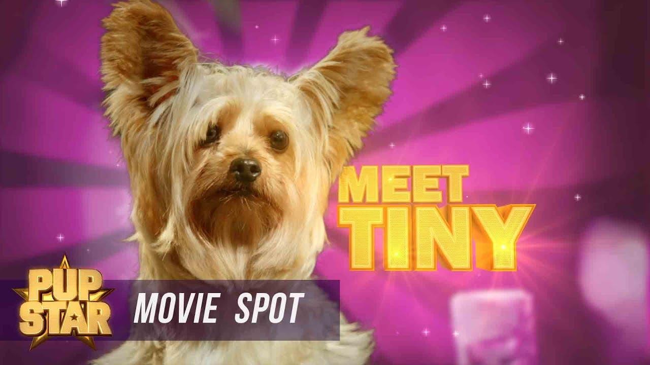 Pup Star - Meet Tiny - YouTube