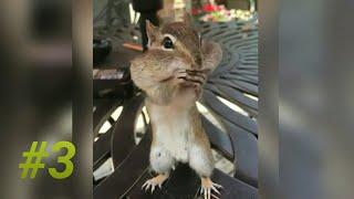 Забавные животные/Funny animals #3