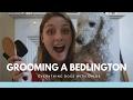 HOW TO GROOM A BEDLINGTON TERRIER - USING BRUSHES の動画、YouTube動画。