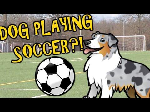 Amazing dog plays soccer / football tricks! - Make Science Fun