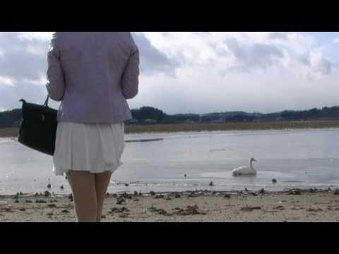 2011 Swan of Lake Izunuma 1