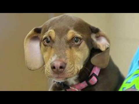 Rescue Pup to the Rescue! Former Shelter Dog Saves Toddler! Watch their Story!