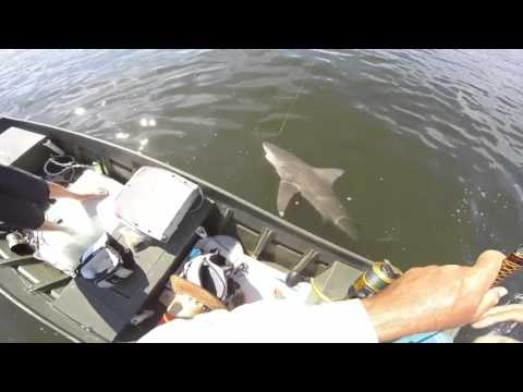 Big Bull Shark Vs Little Jonboat