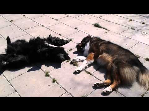 Oleg und Gusena im Tierheim Böblingen