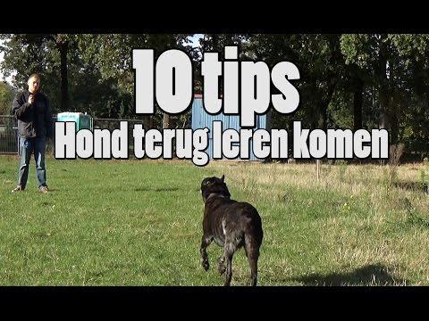 Dog School: 10 Tips voor loslopende honden terug te leren komen