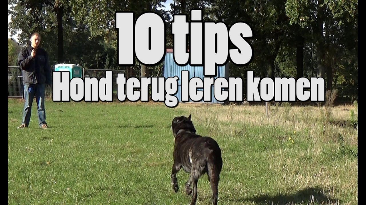 Download Dog School: 10 Tips voor loslopende honden terug te leren komen