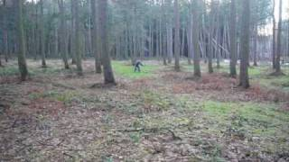 Cocker Spaniel Gundog Training - 1