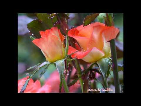 Beethoven Symphony 4 mov.1 -Wiener Philharmonic -Wilhelm Furtwangler conductor -LienNhu