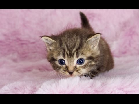 Cute Videos Of Baby Animals Compilation 2016 Best Of
