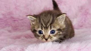 Cute Videos Of Cute Baby Animals Compilation 2016 [BEST OF]